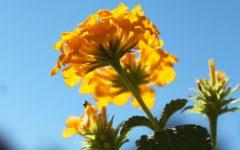 Garden program renewed