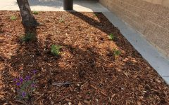 Members of the Save the Bees Club plant drought-resistant plants in early March to continue the club's project.
